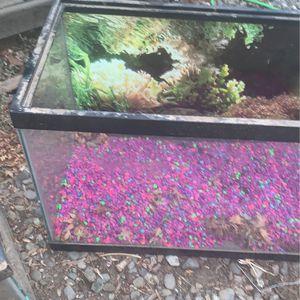 Medium Sized Fish Tank for Sale in Concord, CA