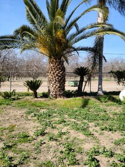 Canary island for Sale in Visalia,  CA