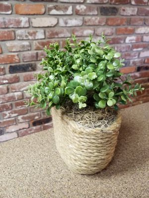 Artificial boxwood plant in rope container for Sale in Medford, OR