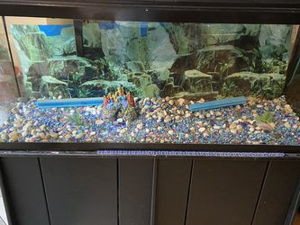 Fish Aquarium With Stand for Sale in Charlotte,  NC