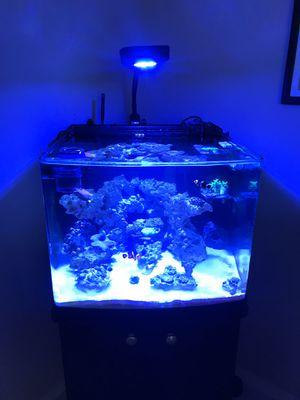 29 gallon rimless BioCube for Sale in Las Vegas, NV
