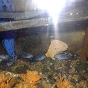 Aquarium Blue Striped for Sale in Fresno, CA