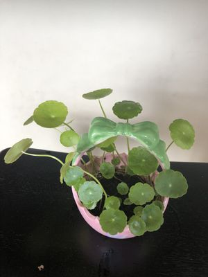 Coin plant in egg shape pot for Sale in Ellicott City, MD