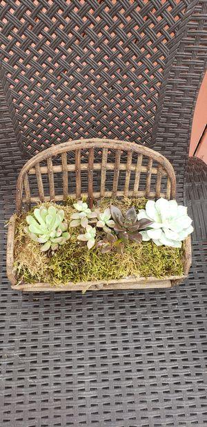 Succulents Chair design for Sale in Virginia Beach, VA