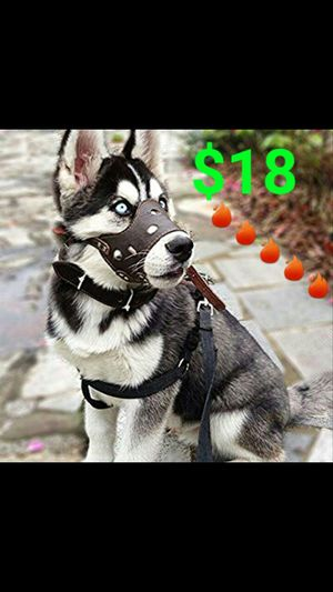 Dog Training Muzzles for Sale in Tolleson, AZ