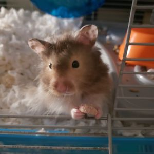 Hamster With Cage! Good Boy! for Sale in Brandon, FL