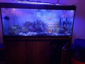Fluval 60 Gallon Saltwater Tank for Sale in Yorktown, VA