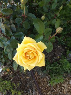 Flower for Sale in Odessa, TX