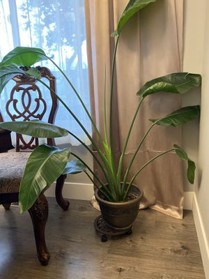 Indoor plant for Sale in Vancouver, WA