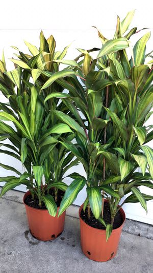 Shade Plants - $16 each for Sale in Garden Grove, CA