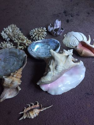 Lace Coral and Shells for Sale in Santa Cruz, CA