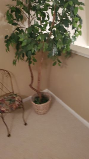 FAKE FICUS for Sale in Fort Lauderdale, FL