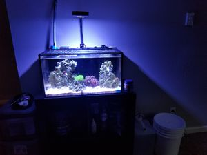 Nano 20 gallon complete salt water set up for Sale in Bellevue, WA