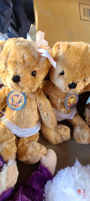 Bears for Sale in San Diego, CA