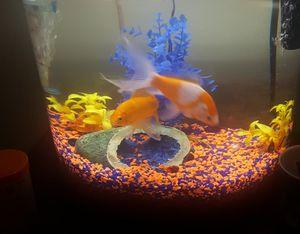 10 Gallon Aquarium for Sale in Reynoldsburg, OH