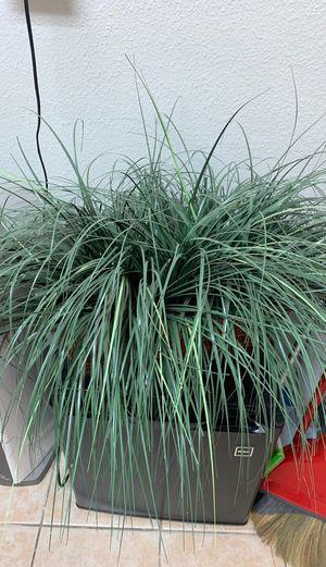 Fake plant for Sale in Chula Vista, CA