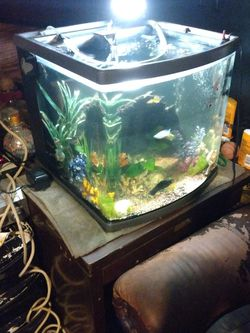 Fish Tank Includes15 Fish Or More for Sale in Bellflower,  CA