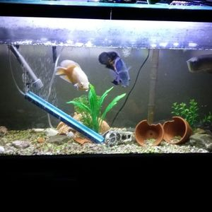 55 Gallon Aquarium With Stand for Sale in Fontana, CA