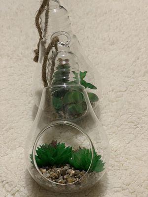 Walgreens succulent hanging bulbs-new for Sale in Cumming, GA