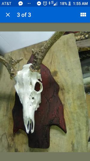 Set of 3 taxidermy deer skull/ antler trophy mounting plaque for Sale in Smithville, MS