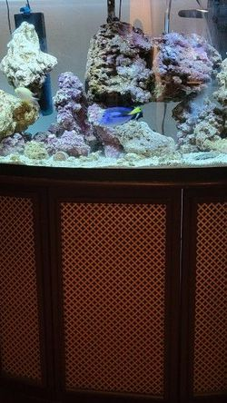 Saltwater Aquarium for Sale in Los Angeles,  CA