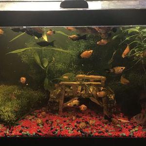 Fish Tank for Sale in Covina, CA