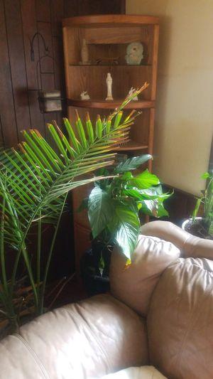Various Indoor/Outdoor New healthy plants!! for Sale in Auburn, WA