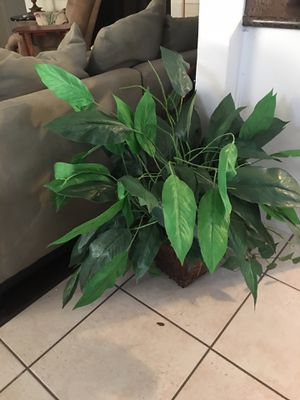 Artificial closet plant for Sale in Katy, TX
