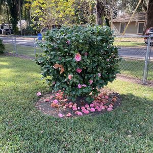 Bush Free For Removal for Sale in Seffner, FL
