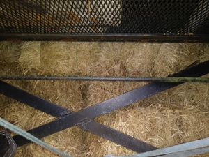 Hay Bails 30lbs each for Sale in Plant City, FL