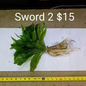 Aquarium Plants Amazon Sword for Sale in Newport News, VA