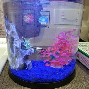 Color Changing Fish Tank for Sale in Mountlake Terrace, WA