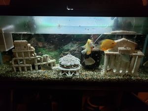 55 gallon fish tank with stand and more for Sale in Bakersfield, CA