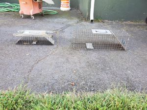 Animal traps $20.00 for both for Sale in New Haven, CT