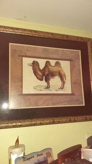 """Camel picture 24"""" x 28"""" for Sale in Lutz, FL"""