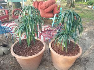 2 potted plants for Sale in CTRLHATCHEE, GA