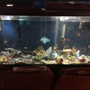 65 gallon fish tank with fish included for Sale in Norfolk, VA