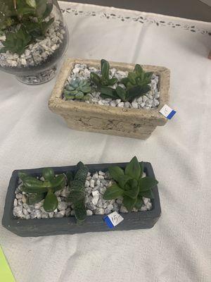 Succulent garden dish for Sale in Paramus, NJ