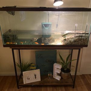 Turtle, Tank And Supplies for Sale in Tacoma, WA