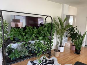 All plants and pots for Sale in Los Angeles, CA