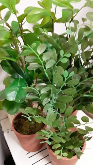 Brand new 3 piece set of assorted green artificial Greenery in clay pots great for indoor or out on a shelf or table for Sale in Oviedo, FL
