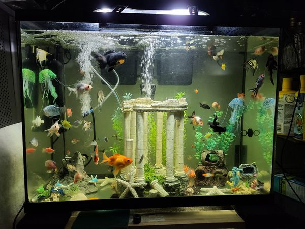 40 Gallons Aquarium Fish Tank ( No fishes, fishes not included )
