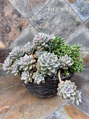 Beautiful succulents for sale! for Sale in Cypress, CA