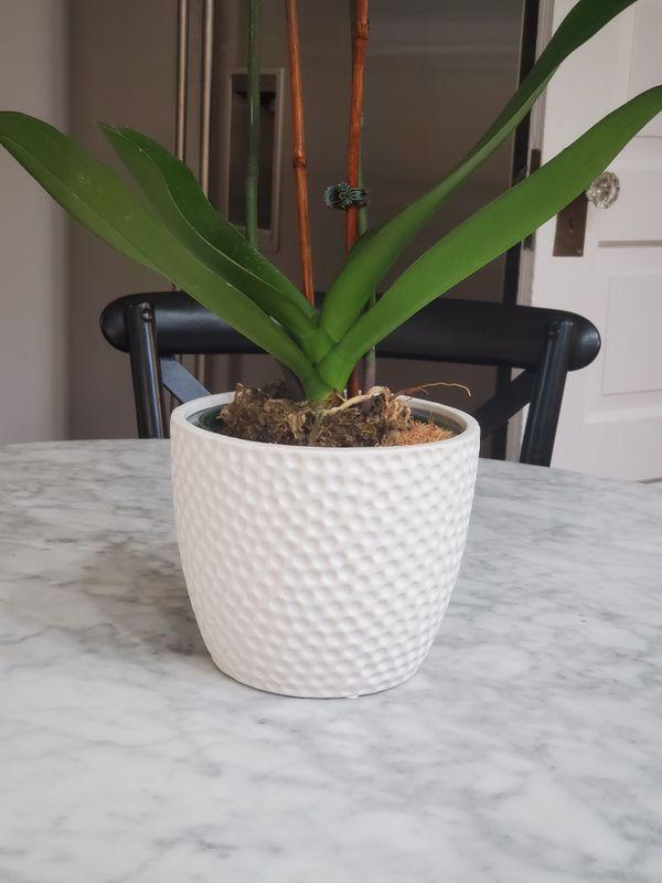 Contemporary Textured White Planter Flower Pot Cachepot Brand New