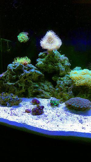 Salt water reef tank for Sale in Lake Charles, LA