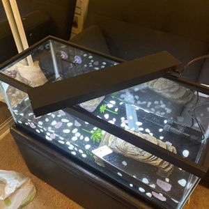 Entire Turtle Tank And Accessories for Sale in La Quinta, CA