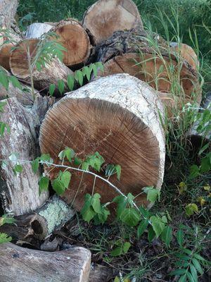 Seasoned Oak Wood for Sale in Southbridge, MA