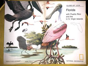 Vintage 1973 National Geographic Map of Florida for Sale in La Habra, CA