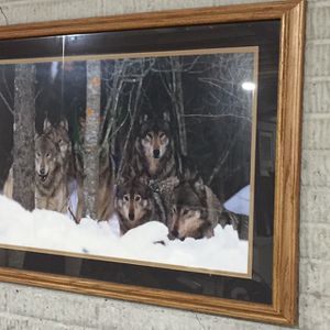 Wolf Pack for Sale in Northville, MI
