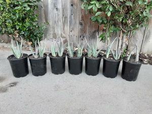 Aloe vera for Sale in Clovis, CA